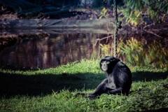 zoo-dortmund-4