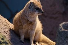 zoo-dortmund-6